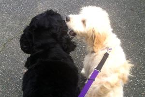 Dog Walker Queen Anne, 98109 98119 Dog Walking, Sniff Seattle Bellevue