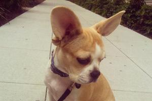 AVA Queen Anne Apartments, Dog Walking 98119, Bellevue Seattle Dogwalkers