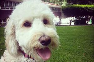 Sniff Seattle Bellevue, Dog Walker Belltown, 98121 Dog Walking