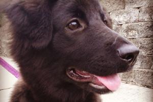 Dogwalker Lynnwood, Sniff Seattle Bellevue, Puppy Walking Lynnwood