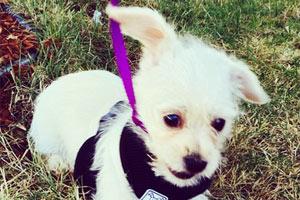 Puppy Care 98107, Dog Walker Crown Hill, Sniff Seattle Bellevue