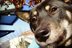 Dog Walker Lower Queen Anne, Sniff Seattle Bellevue, 98119 98109 Puppy Care