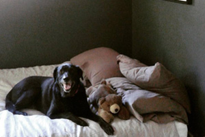 Black Lab, Dog Walking 98112 98122, Madison Valley Dog