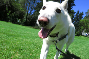 98125 98115 Dog Walker, Victory Heights Dog Walking, Sniff Seattle Bellevue