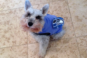 Dogs Wearing Seahawks, Queen Anne Dogs, Bellevue Seattle Dog Walking