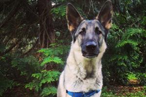 Dog Walking Madrona, Bellevue Seattle Dogs, Dog Walking Washington Park Arboretum