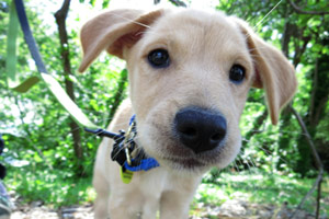 Seattle Puppies, Puppy Care 98103, Sniff Seattle Bellevue Dog Walkers