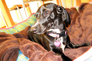 Puppy Care Wedgwood, Dachshunds, Bellevue Seattle Dogs