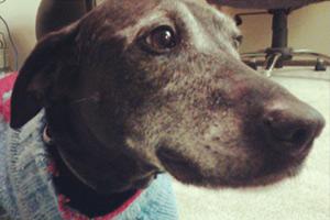 Sniff Seattle Magnolia, 98199 Dog Walking, Sinopah