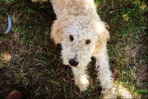 Dog Walker Madison Valley, 98112 98122 Dog Walking, Bellevue Seattle Dogs