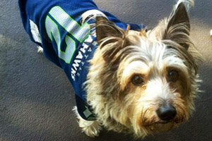The 12th Dog, Seahawks Dogs, Dog Walker Fremont Seattle