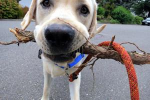 Mercer Island Dog Walker, Dog Walking Seattle Eastside, Mercer Island Dogs