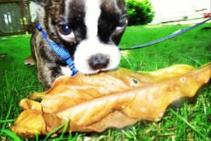 Greenwood Dog Walker, Puppies, Sniff Seattle Bellvue