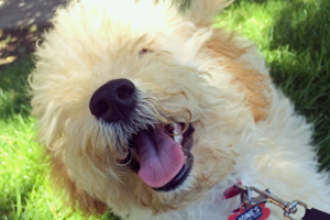 Dog Walking West Seattle, Puppy Care, 98106 Puppies
