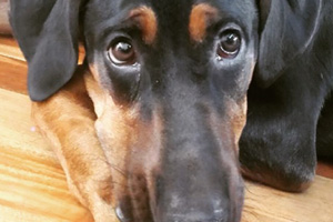 Puppy Care Seattle, Bellevue Seattle Dogs, Dog Walking Leschi 98122