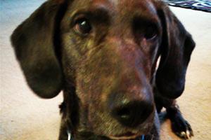 Magnolia Dog Walkers, Sniff Seattle Bellevue, Dog Walking 98199