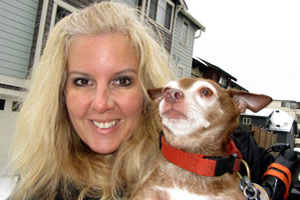 Ballard Dog Walking Snow, Sniff Seattle Dog Walkers, Bob The Chihuahua