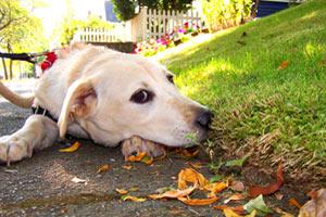 98112 Dog Walking, Corgidor, Capitol Hill Seattle