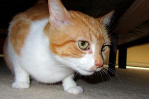 Cat Sitters 98033, Sniff Seattle Pet Sitting, Kirkland Cats