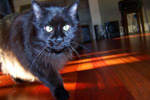 Seattle Cat Sitters, Sniff Seattle Bellevue Dog Walkers, Wedgwood Pet Sitter