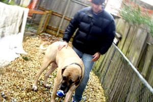 Sniff Seattle Bellevue, Greg Valentine, Dog Walker Central District