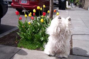 Hallelujah, Dog Walkers Ballard, Sniff Seattle