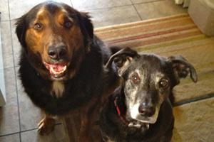 Sniff Seattle Bellevue,, Interbay Dog Walking, Pet Care 98119