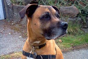 98115 Dog Walkers, Seattle Bellevue Dogs, Sniff Seattle