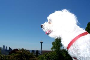 Sniff Seattle Dogs, Pet Sitter Bellevue Seattle, Space Needle