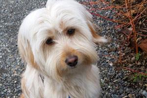 Dog Walking Issaquah, Issaquah Highlands, Dog Walker 98029