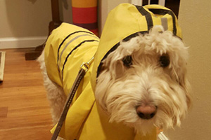 Dog Walker 98004 98005, Gorton's Fisherman
