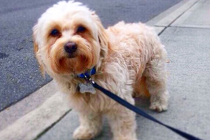 Dog Walker 98033 98034, Kirkland Dog Walking, Sniff Seattle Bellevue Dog Walkers
