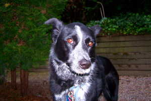 Pet Sitter Magnolia, Sniff Seattle Magnolia, Pet Sitter 98199