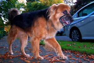 Dog Sitters 98119, Queen Anne Pet Sitters, Sniff Seattle Bellevue Dog Walkers