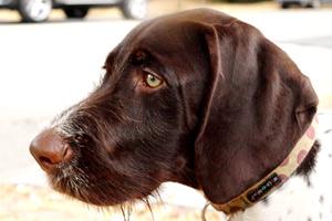 Queen Anne Dogwalker, Louie Louie, Sniff Seattle Bellevue Dog Walkers