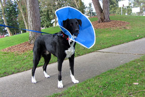 Dog Care Shoreline, Border Collies, Sniff Seattle Bellevue