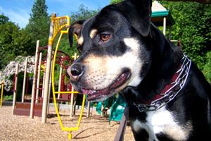 Dog Sitters 98109, Bellevue Seattle Dogs, Sniff Seattle Queen Anne