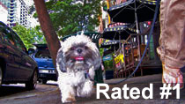 Best Dog Care Seattle